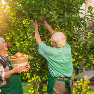 How to Grow Fruit Trees in Your Own Backyard
