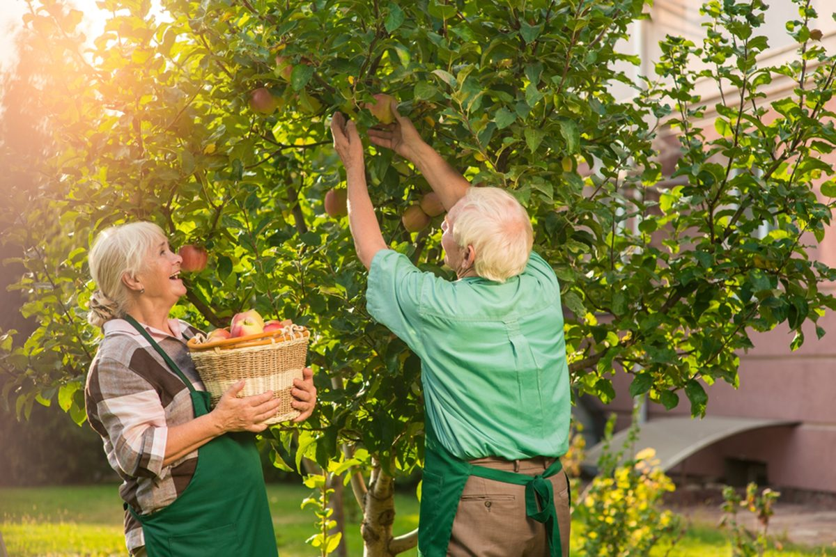 How to Grow Fruit Trees in Your Own Backyard | Taste of Home