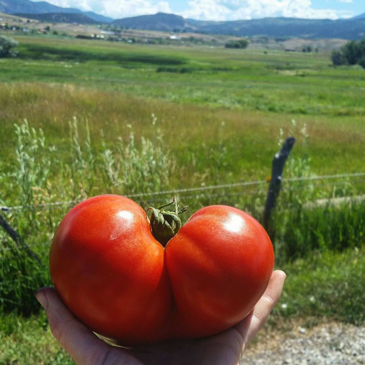 best farm tour colorado