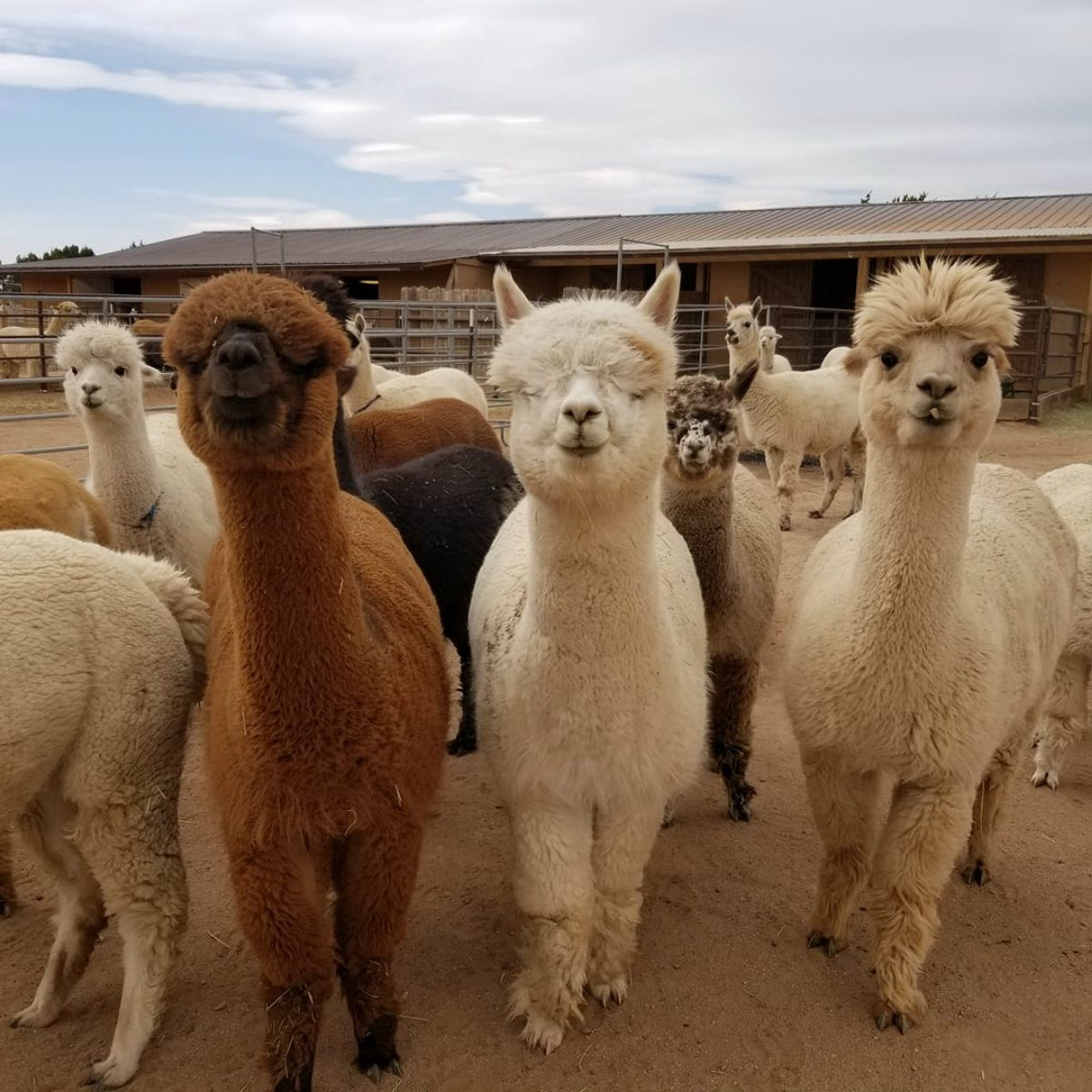 best farm tour new mexico