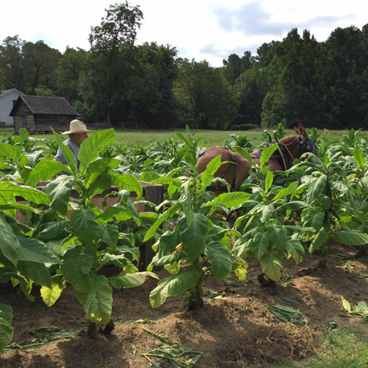 best farm tour north carolina