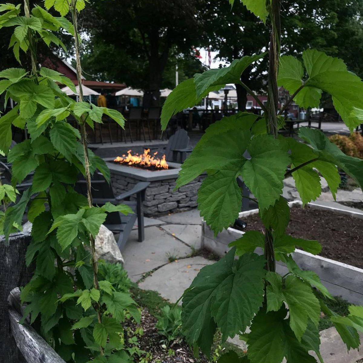 Idletyme Brewing's beer garden complete with a bonfire