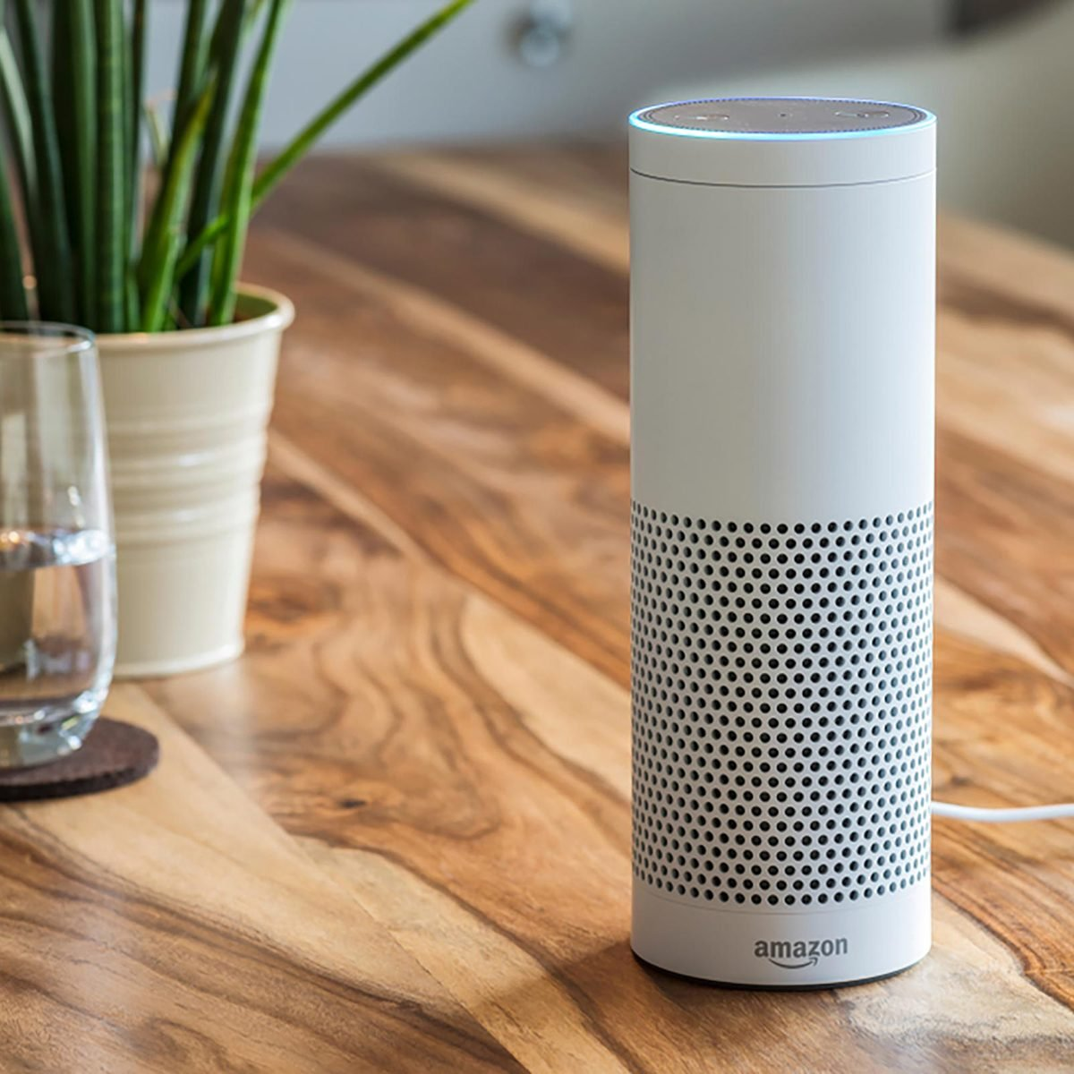 Echo on a wood table with a plant