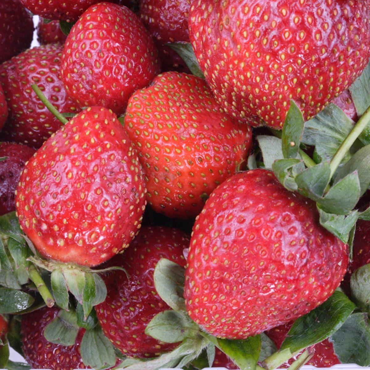 many raw red Strawberry
