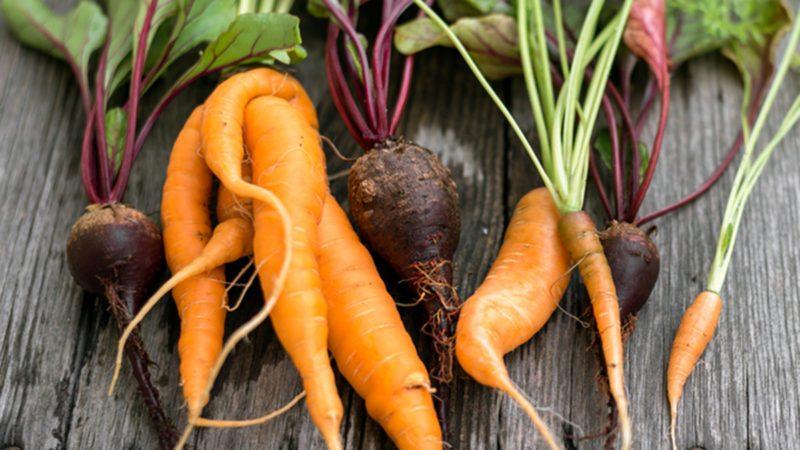 Trendy ugly organic carrot and beetroot from home garden