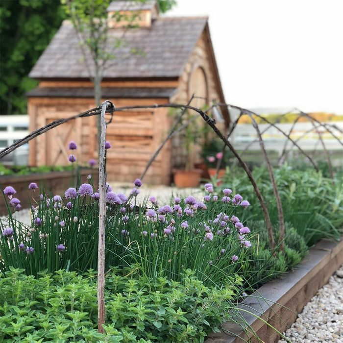 farmhouse or chicken coop in garden