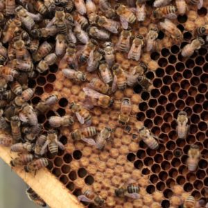 3 Reason to Buy Raw Honey