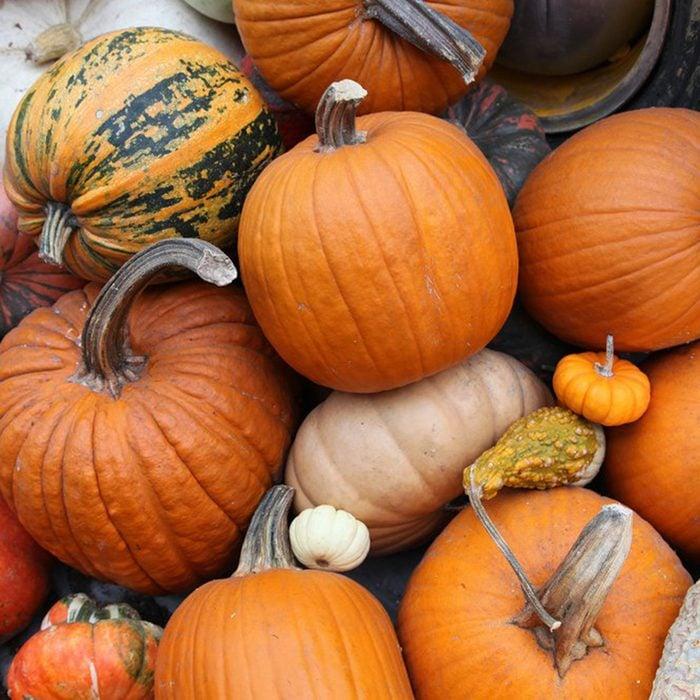 Various pumpkins and gourds