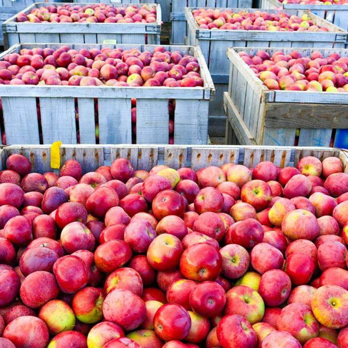 Wooden crates full of ripe apples during the annual harvesting period