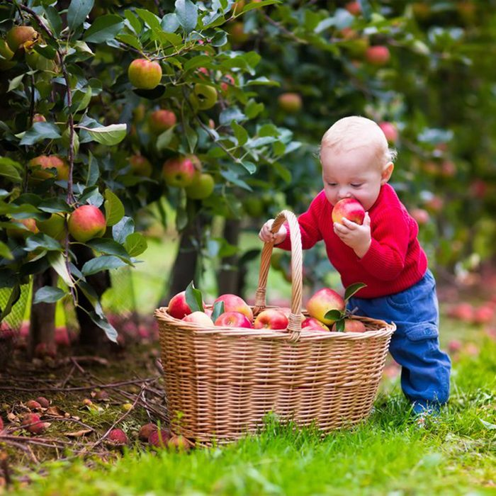 Young boy taking apples out of a basket