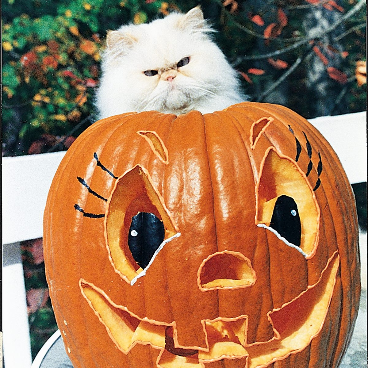 cat sitting on a jack-o-lantern pumpkin Halloween /COU Magazine/1994/October-November-1994_1586/2425-4445_HiRes
