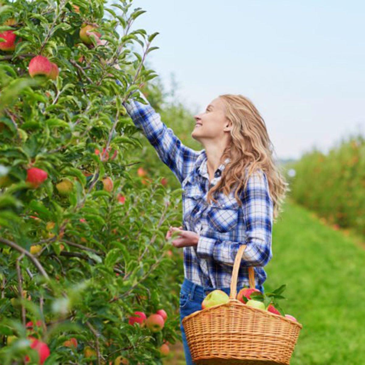 Cox Berry Farm
