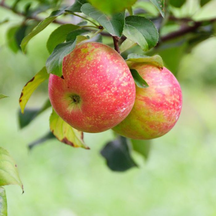 Crow Mountain Orchard, Fackler