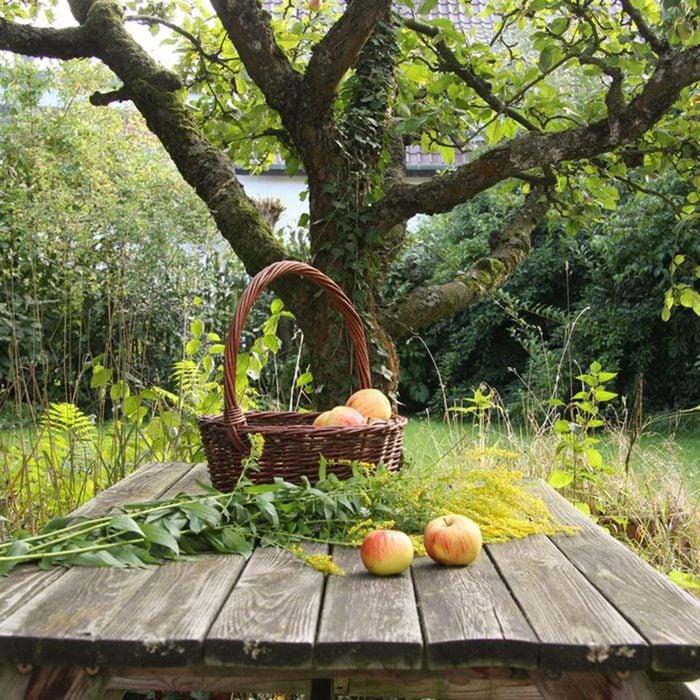 Edwards Orchard