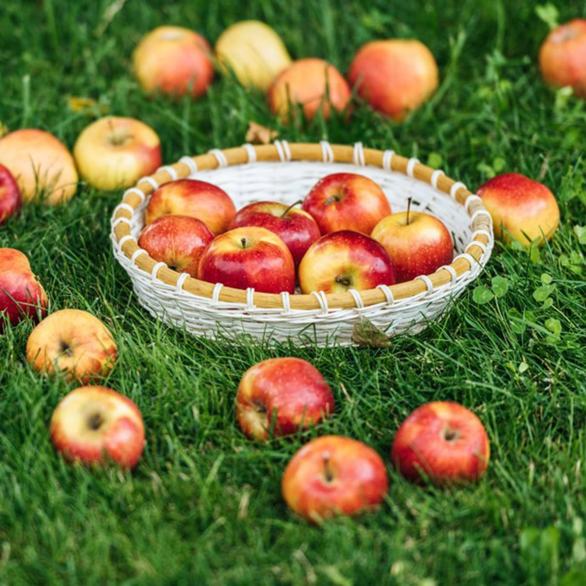 Apples on the ground and in a basket
