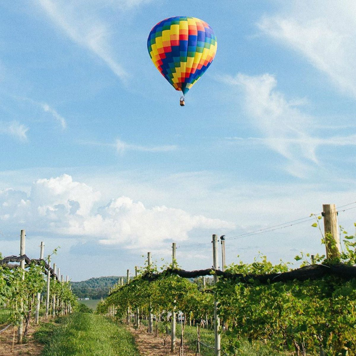 Soaring Wings Vineyard with a hot balloon flying overhead