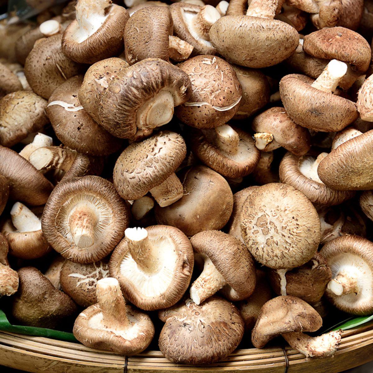 Raw and dried shitake mushroom that has medicinal nutritional health benefits