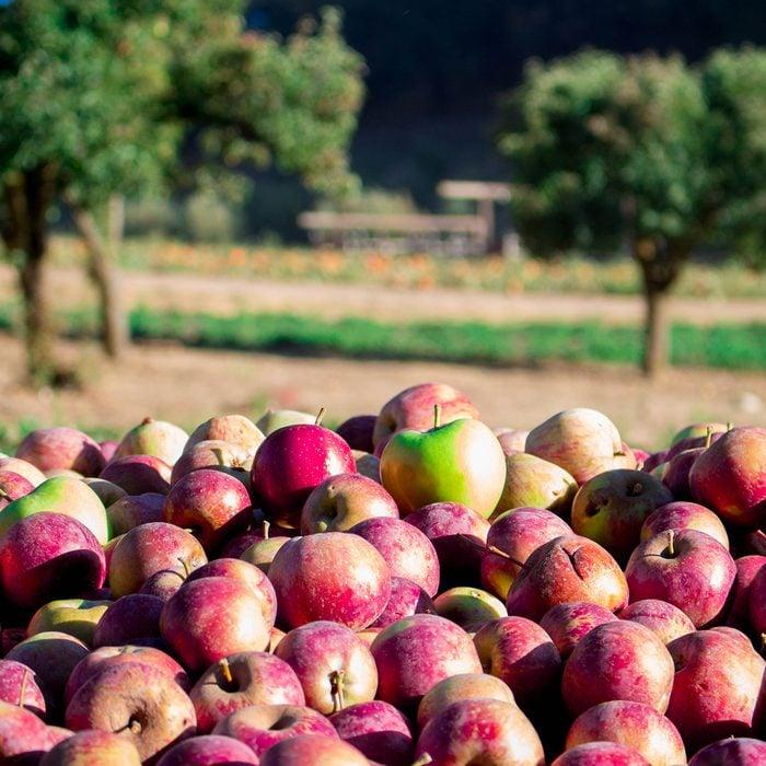 Apples at Riley's Farm