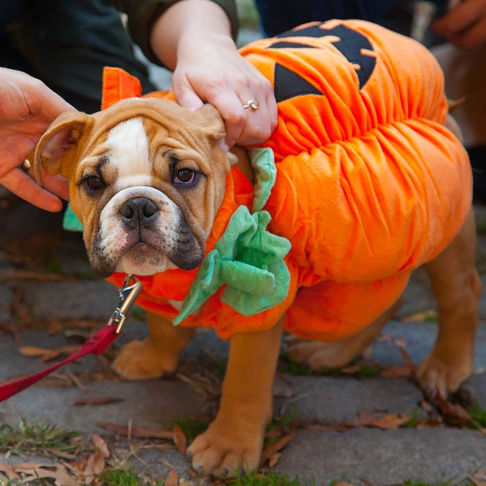 Scenes from The 24th Annual Tompkins Square Halloween Dog Parade