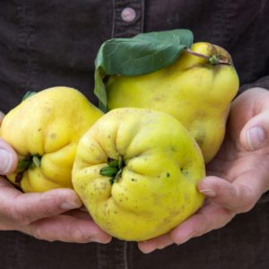 What Is Quince, and What Can I Cook With It?