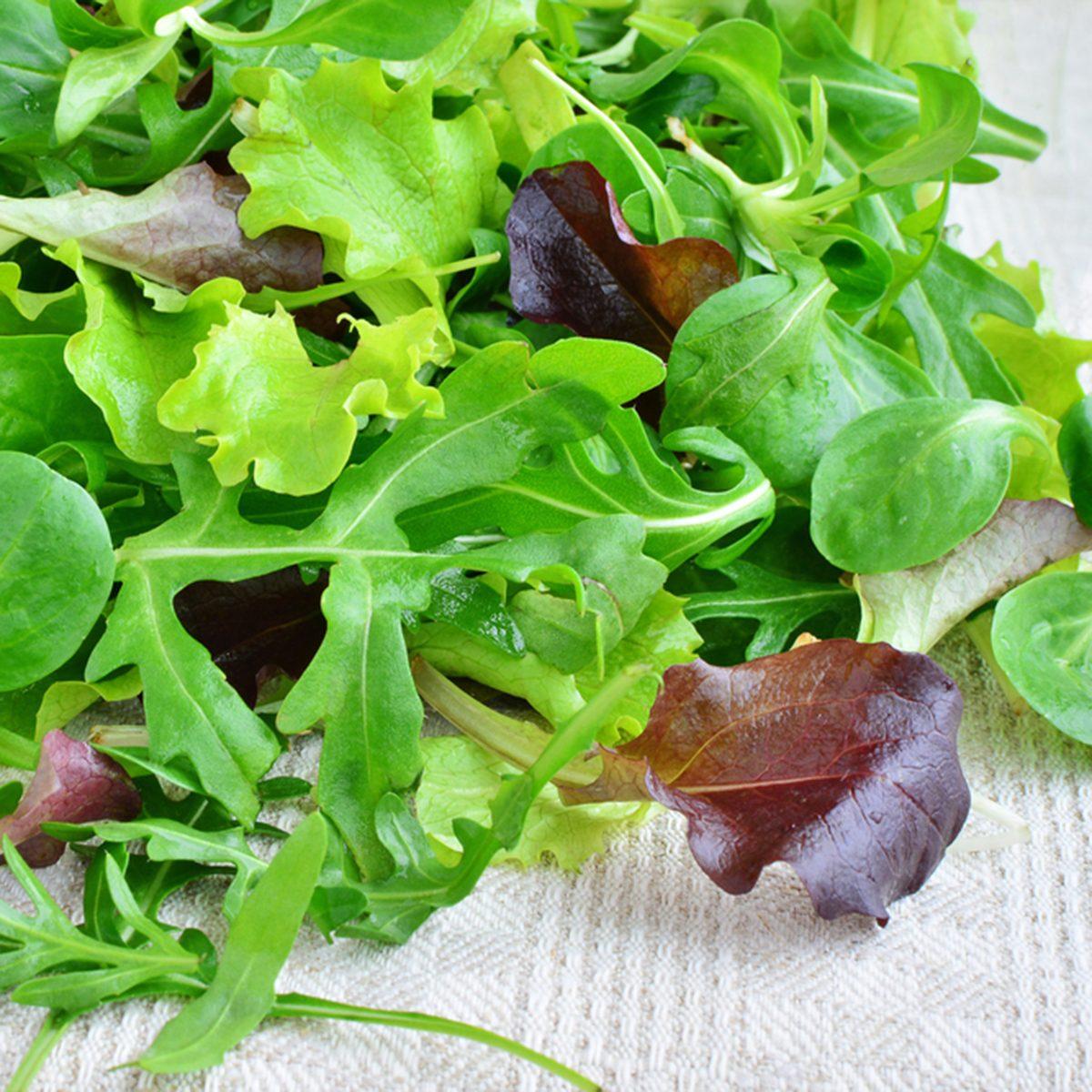 Fresh mixed greens leaf vegetables of arugula, mesclun, mache over kitchen towel