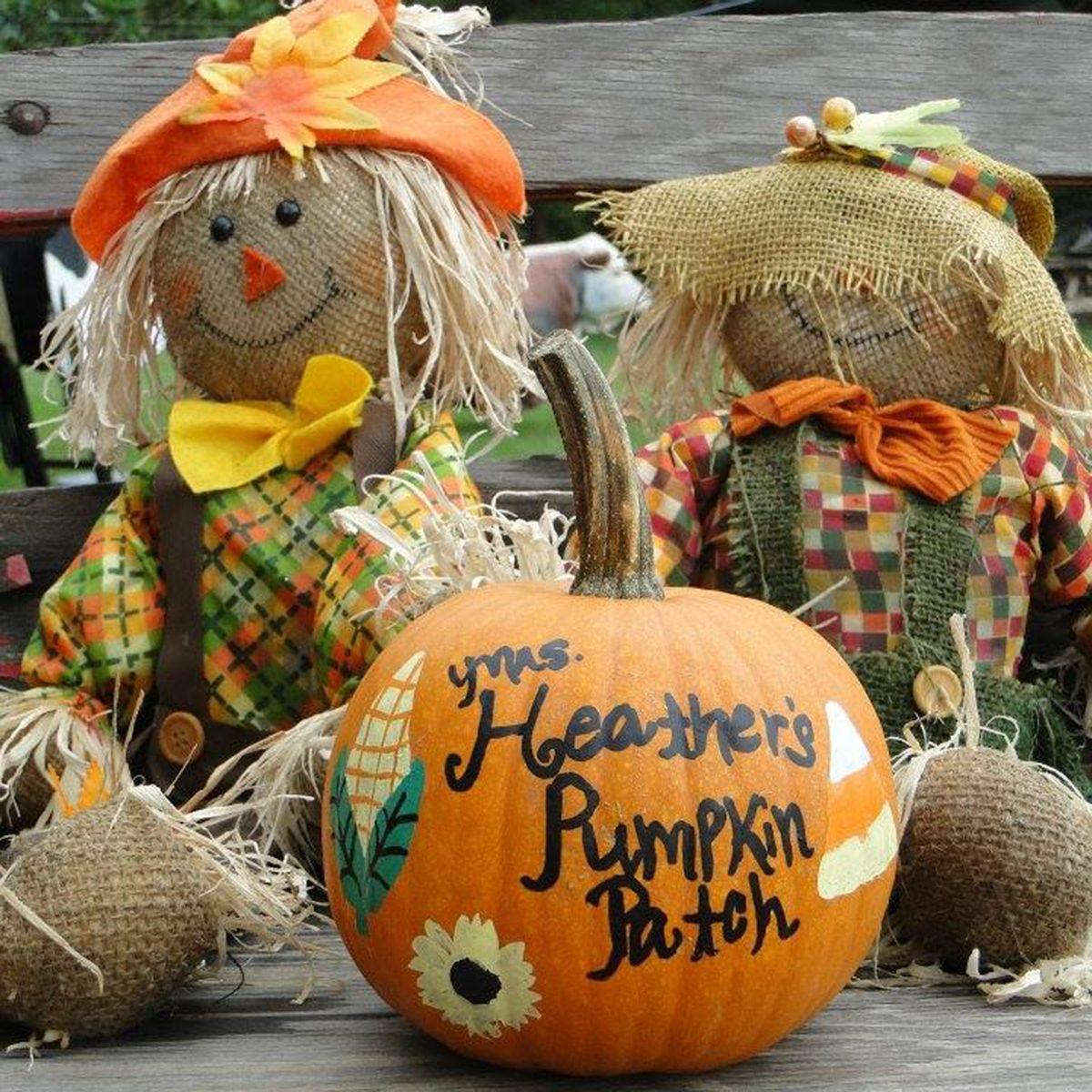 Mrs. Heather's Pumpkin Patch