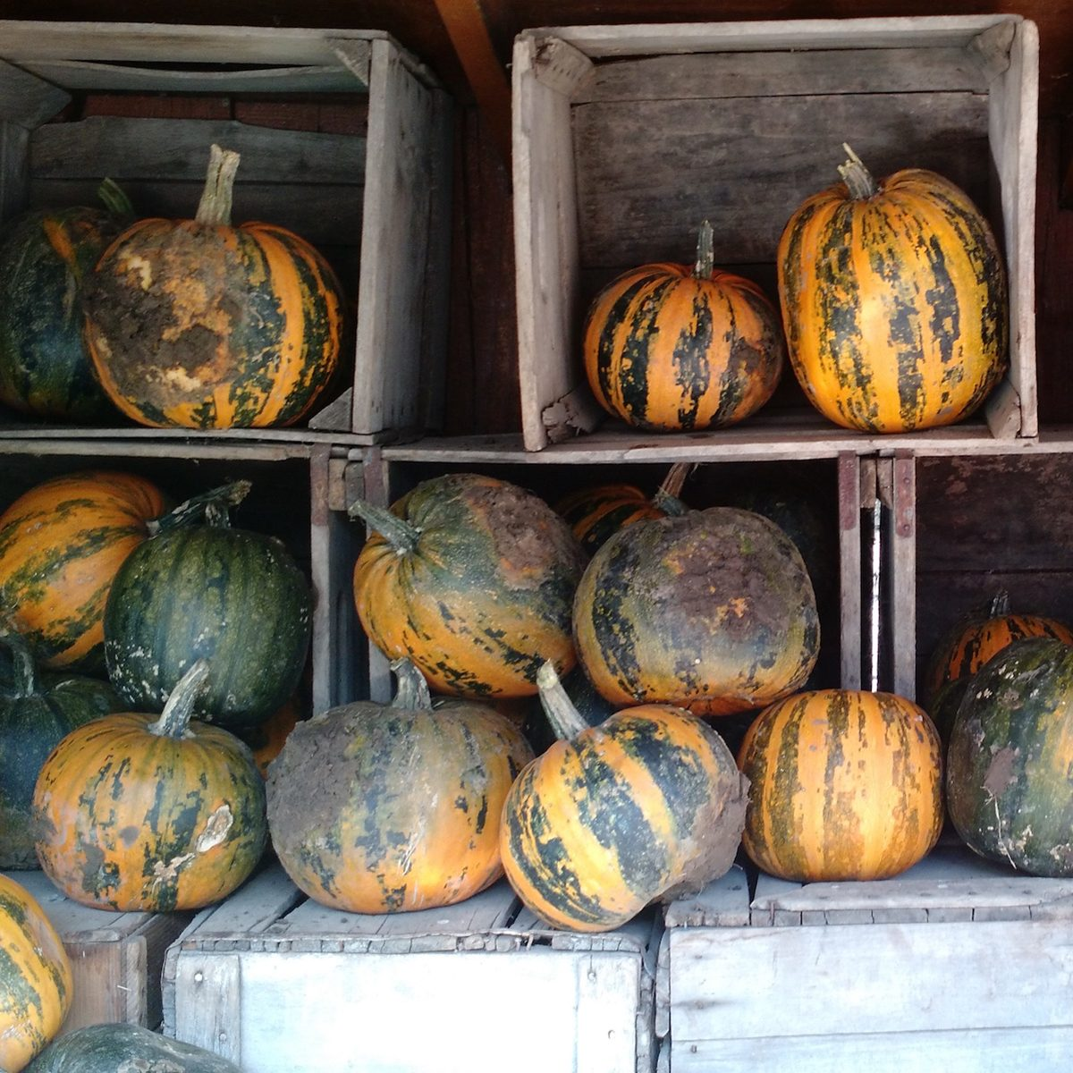 The Best Pumpkin Patch in Every State | Taste of Home