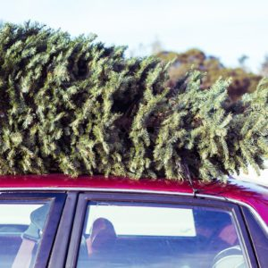 Christmas Tree Delivery Is a Thing and We're So on Board