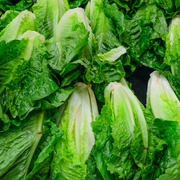 Group of fresh organically grown fresh romaine lettuce