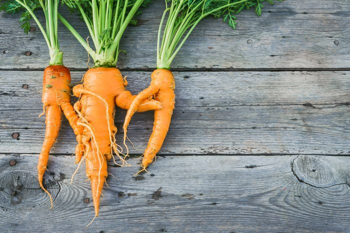 Trendy ugly organic carrot from home garden bed on barn wood table
