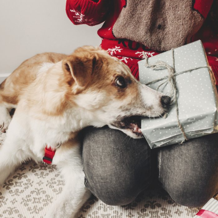 New Year celebration, beautiful girl opening presents with dog, smiling woman in warm sweater and Santa Claus hat playing with dog and gift near Christmas tree, winter holidays concept; Shutterstock ID 774321469; Job (TFH, TOH, RD, BNB, CWM, CM): TOH