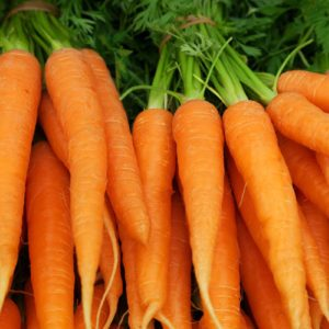 Bunches of colorful orange carrots with green tops held together with elastic bands.