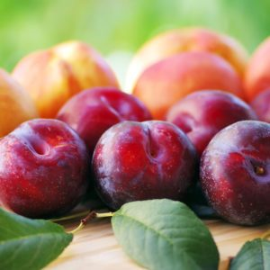 Fresh Peaches, Nectarines and Plums Have Been Recalled in 18 States