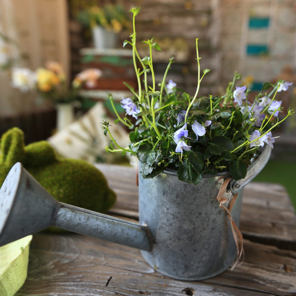 view from the top.watering can with flower arrangement.