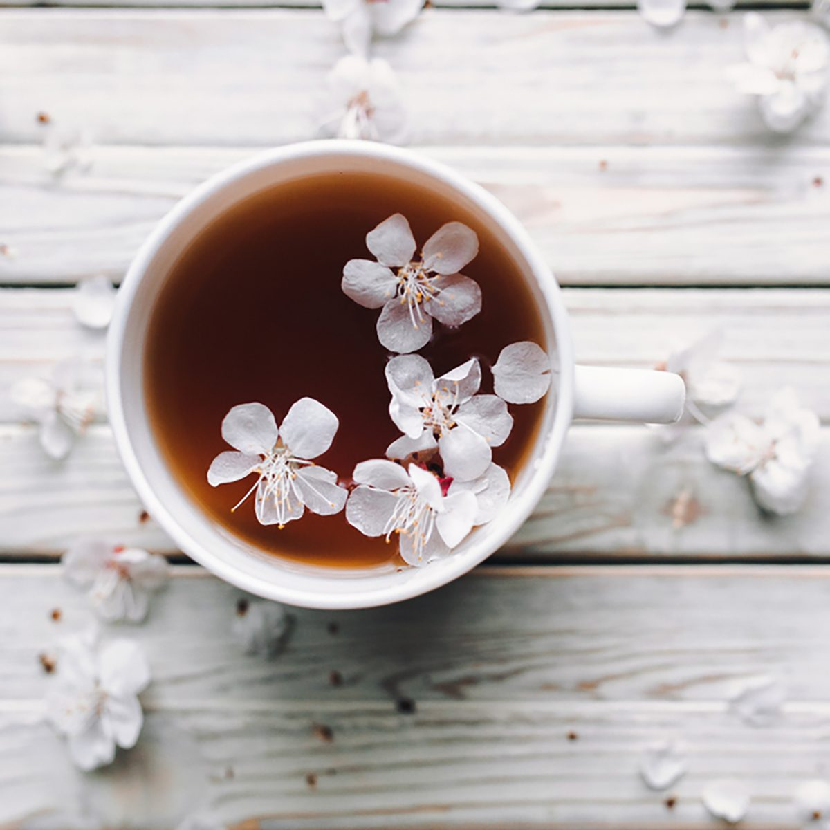 Cup of tea and spring apricot blossom on a white wooden background.