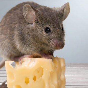 Here's the Secret, Non-Toxic Trick to Evicting Mice from Your Kitchen