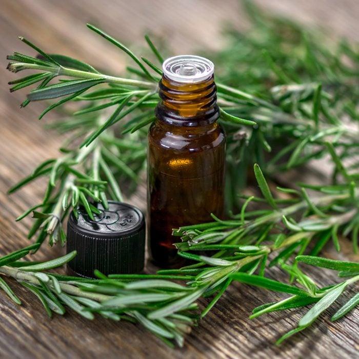 Rosemary essential oil and fresh rosemary ; Shutterstock ID 552134410; Job (TFH, TOH, RD, BNB, CWM, CM): TOH