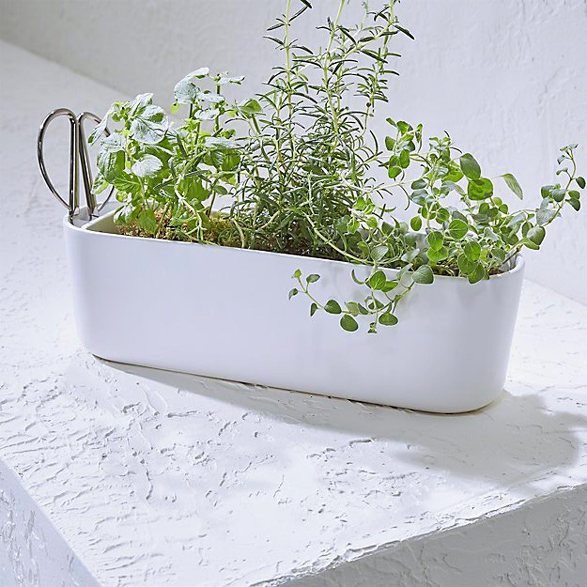 Herb Planter with Scissors