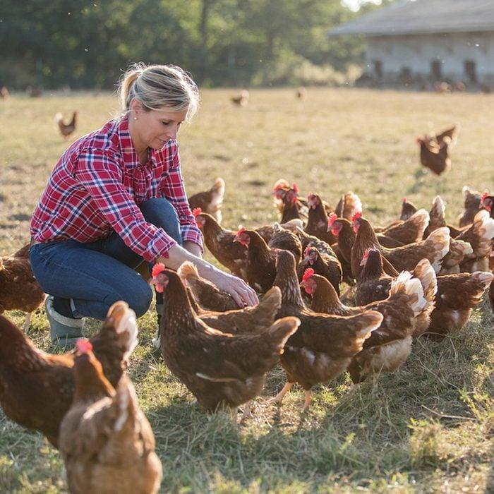 female farmer looking for eggs