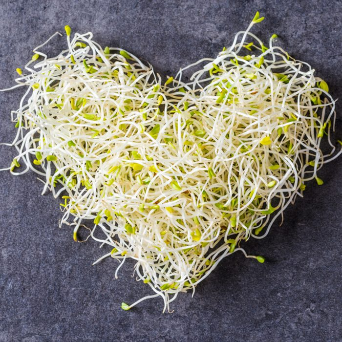 Alfalfa seed sprouts