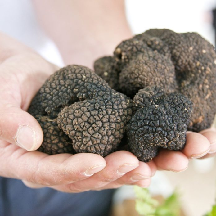 The Real Reason Why Truffles Are So Expensive
