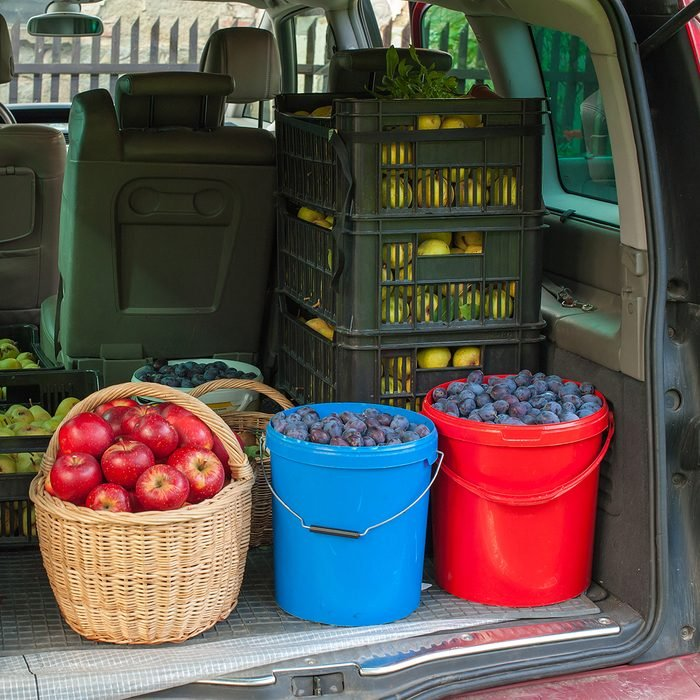 Car trunk full of autumn harvest from the forest and garden