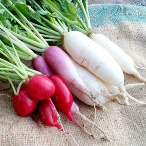 10 Radish Health Benefits You Need to Know