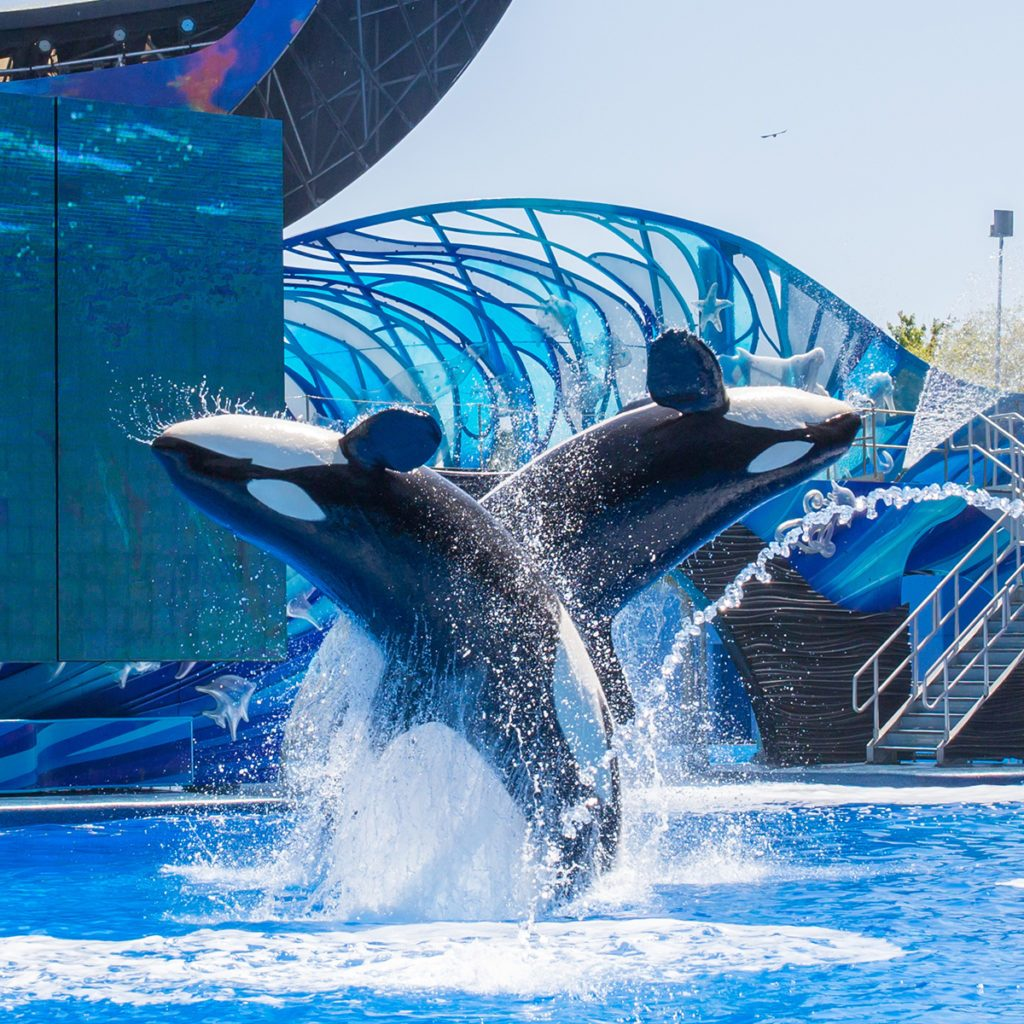 ORLANDO, USA - March 30, 2015: Killer Whales perform during the Shamu Show at Sea World Orlando - one of the most visited amusement park in the United States on March 30, 2015 in Orlando, Florida, USA; Shutterstock ID 266180681; Job (TFH, TOH, RD, BNB, CWM, CM): Taste of Home