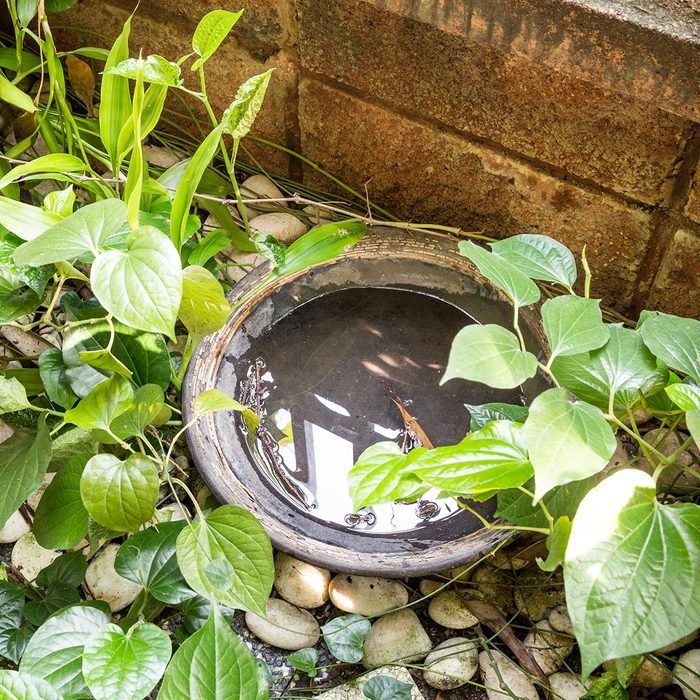 Tray and pans in outdoors stores stagnant water and breeding ground for mosquito