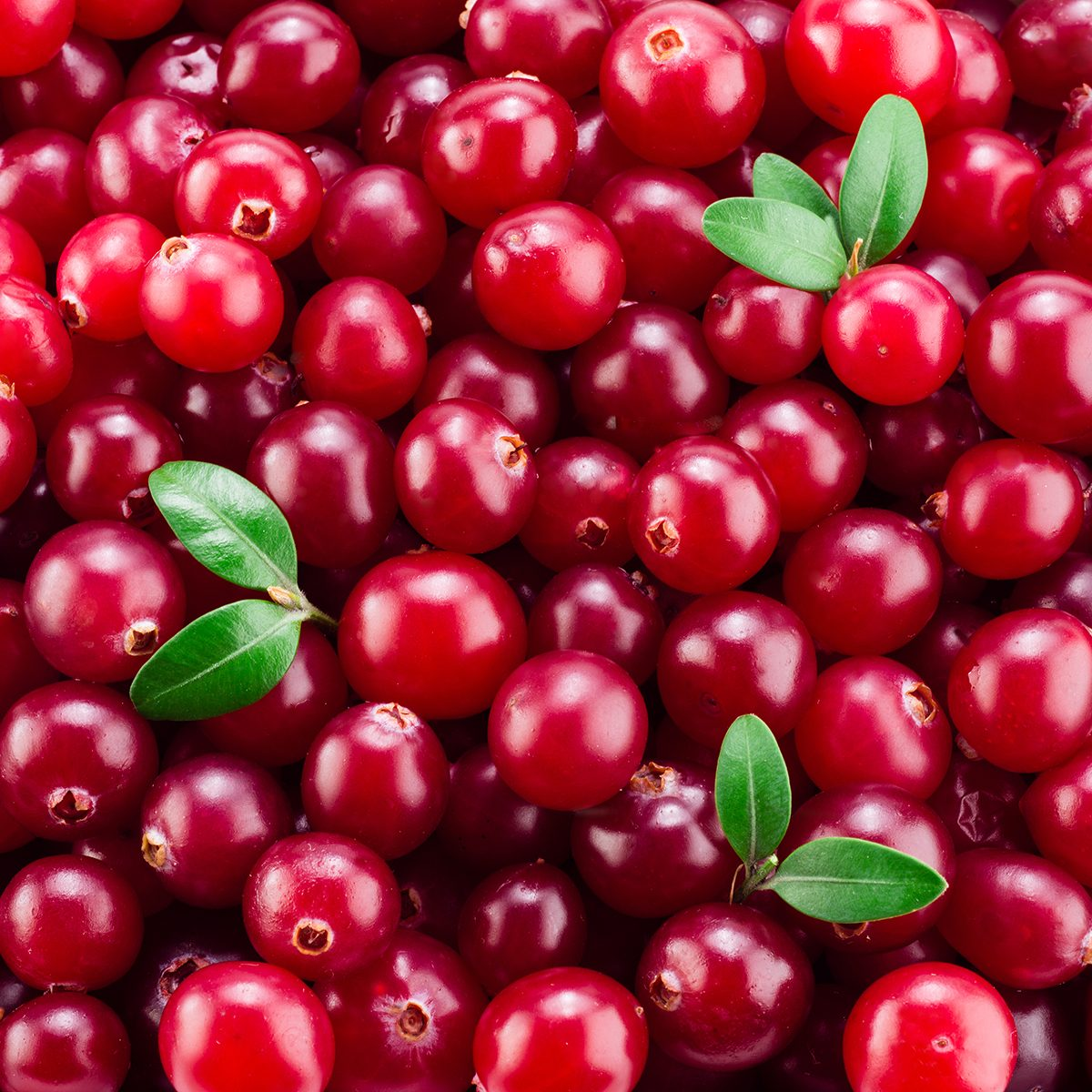 Cranberry with leaves. Red background.