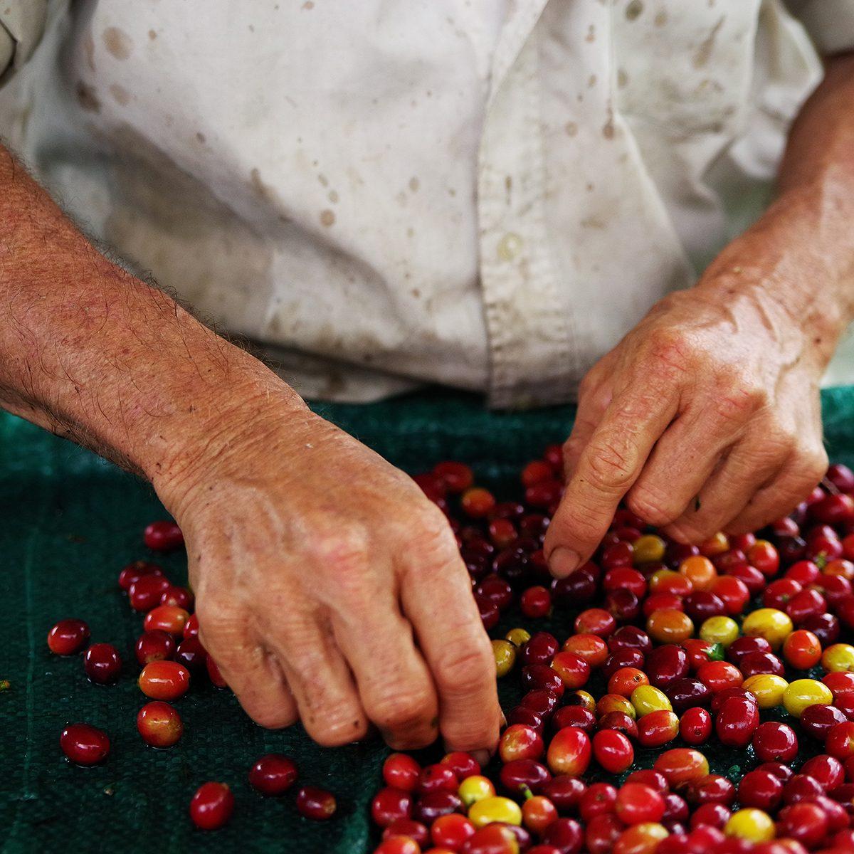 Raw coffee beans;