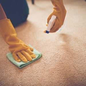 Close-up image of woman removing stain from the carpet; Shutterstock ID 351308864; Job (TFH, TOH, RD, BNB, CWM, CM): Taste of Home