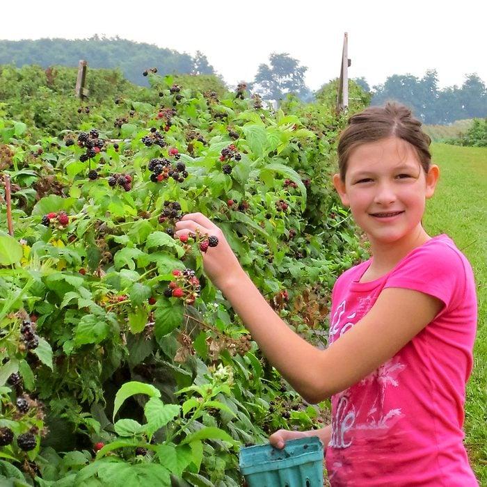 Hess Farms - girl picking berries
