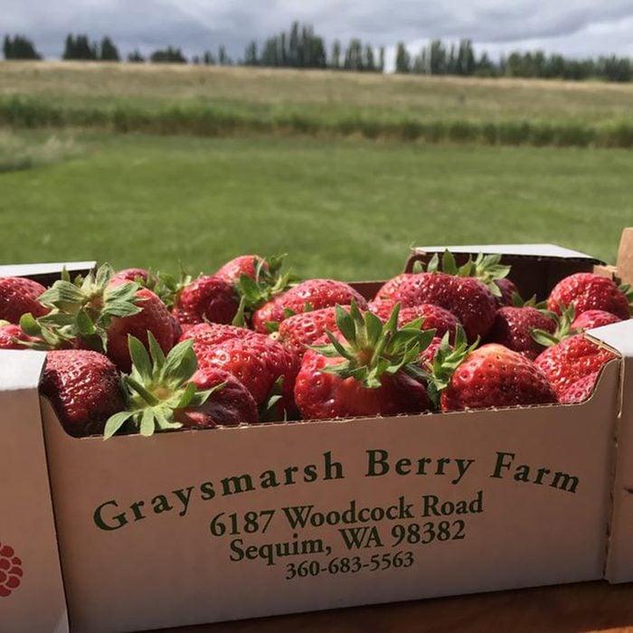 Strawberries on Graysmarsh Farm